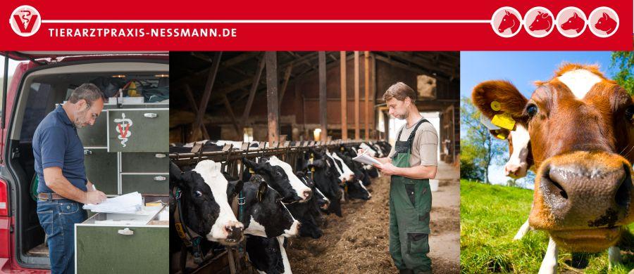 Tierarztpraxis Nessmann - LKV-Daten für Milchviehbetriebe