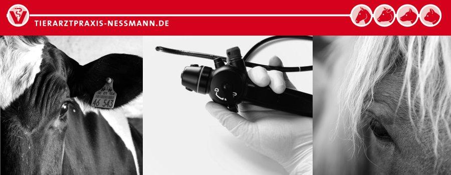 Endoskopie in der Großtierpraxis Neßmann