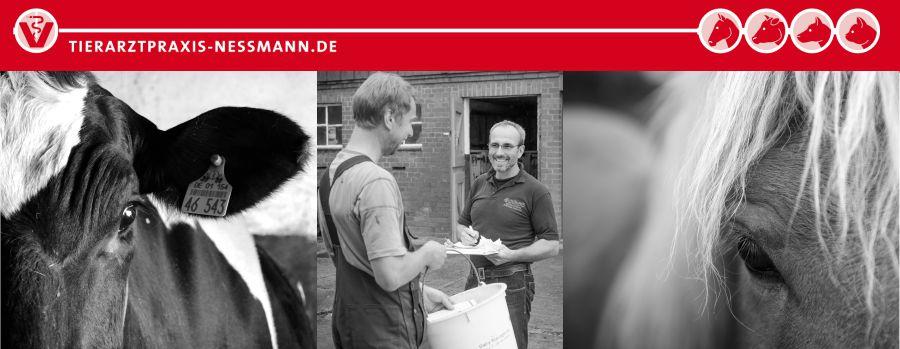 Tierarzt Großtiere - Tierarztpraxis Nessmann, Bad Oldesloe