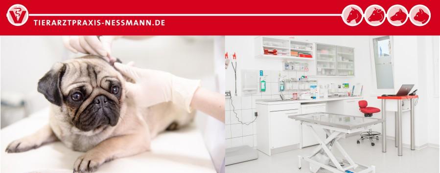 Endoskopie Tiermedizin - Tierarztpraxis Nessmann