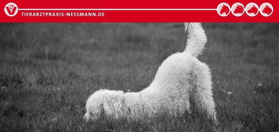 Kastration Hund und Hündin - Tierarztpraxis Neßmann