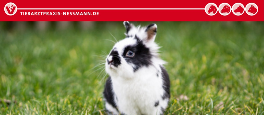 Schutzimpfung Kaninchen