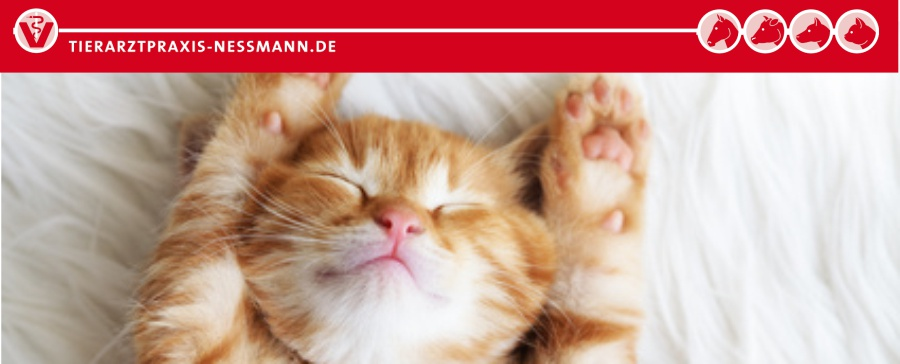 Schutzimpfung Katze - Tierarztpraxis Nessmann