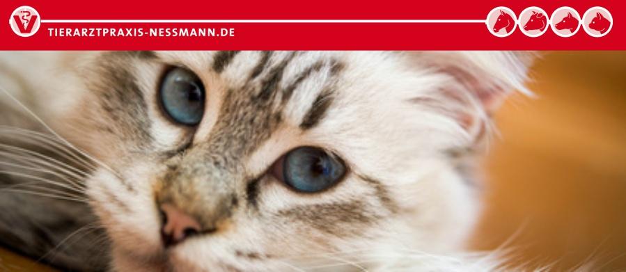 Kastration Katze und Kater - Informationen der Tierarztpraxis Nessmann