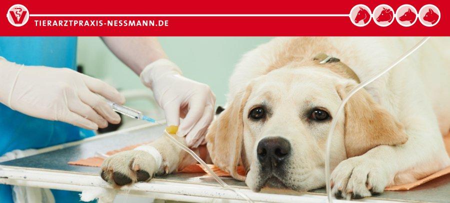 Operation Hund - Tierarzt Nessmann