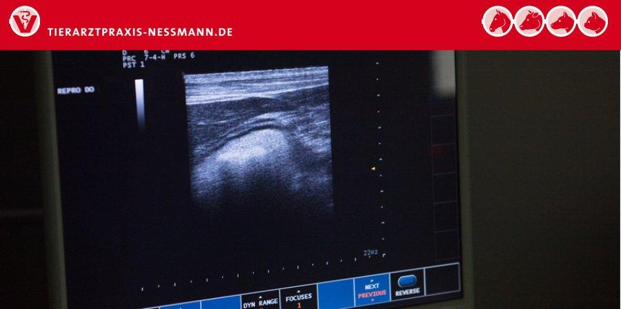 Ultraschall - Untersuchungen in der Kleintierpraxis