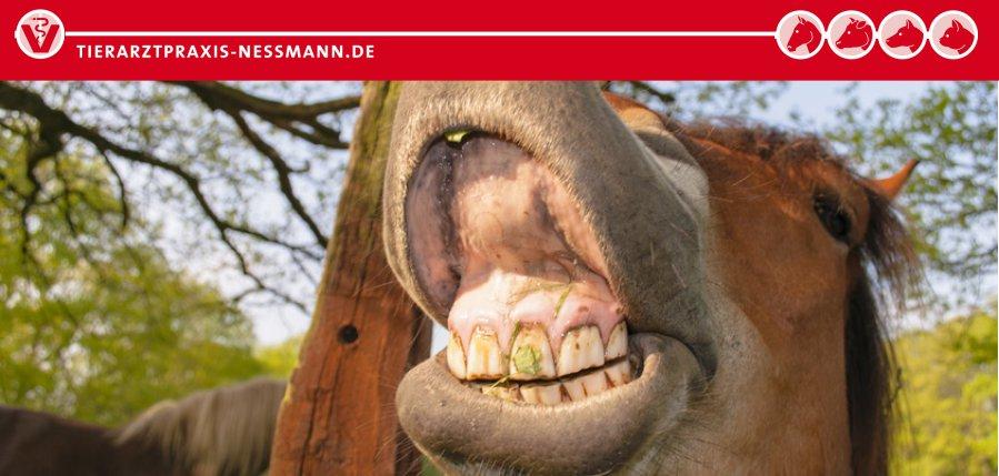 Zahnbehandlungen beim Pferd - Tierarztpraxis Nessmann