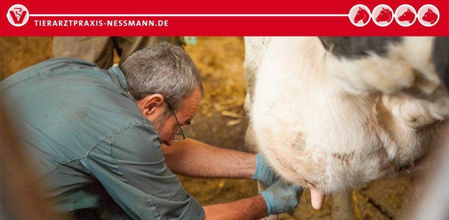 Mastitisdiagnostik – Milchlabor | Tierarztpraxis Neßmann