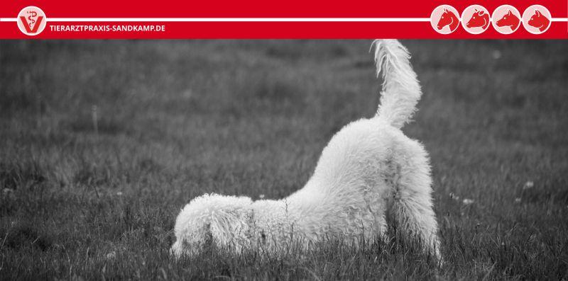 Wenn das Haustier alt wird, sind regelmäßige Untersuchungen empfohlen
