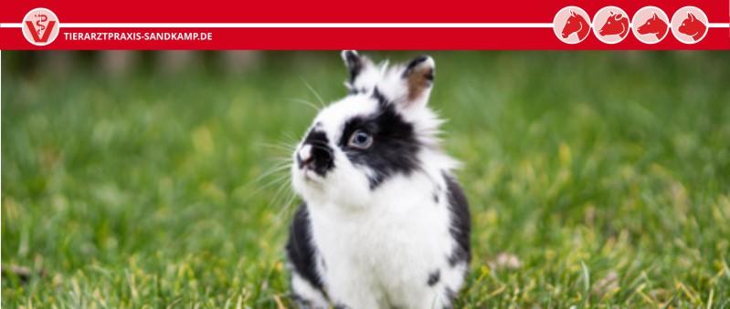 Impfung beim Kaninchen - für ein langes, gesundes Leben