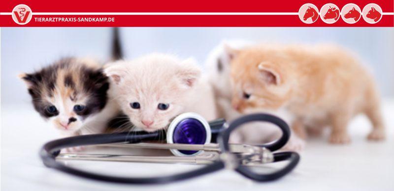 Impfungen schützen Ihre Katze