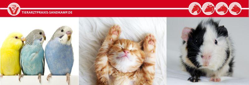Kleintierhalter finden hier hilfreiche Tipps und Informationen