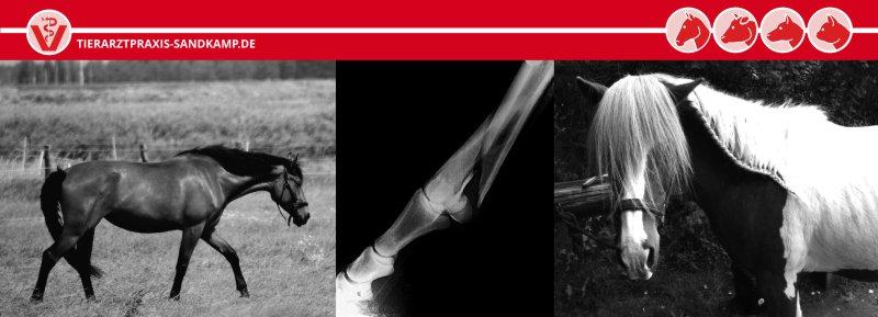 Wenn das Pferd lahmt, bringt Röntgen schnelle Gewissheit über die Ursachen