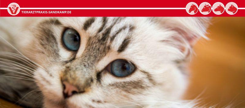 Tierarztpraxis am Sandkamp