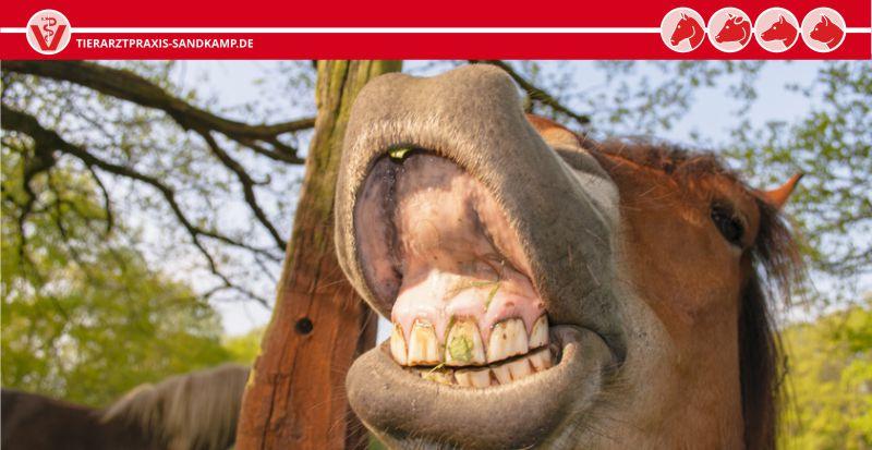 Zahnbehandlung beim Pferd | Tierarztpraxis am Sandkamp